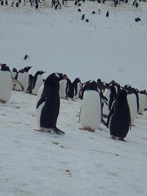 南極2日目 (36)