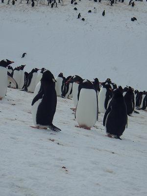 南極2日目 (37)