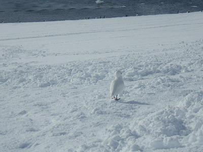 南極3日目 (20)