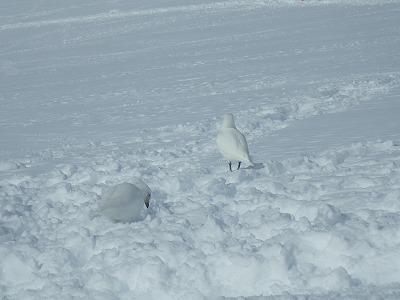 南極3日目 (21)