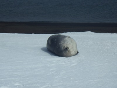 南極5日目 (11)