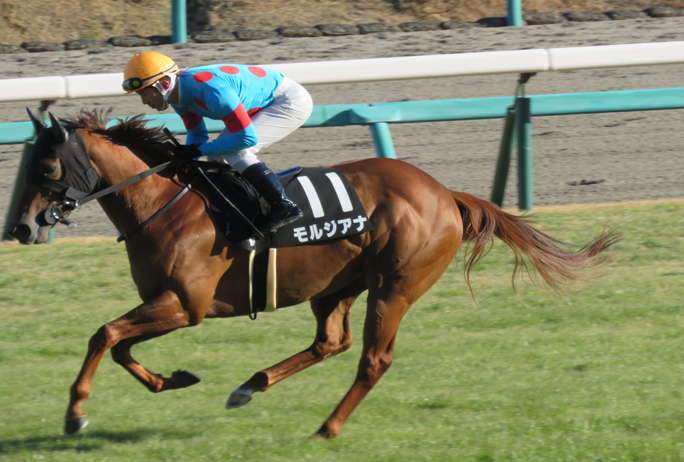 モルジアナ・返し馬2