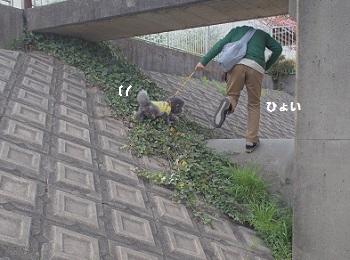 公園さんぽ20150425-6