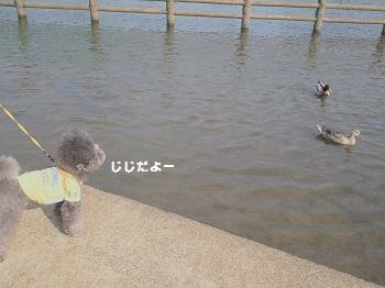 公園さんぽ20150425-11
