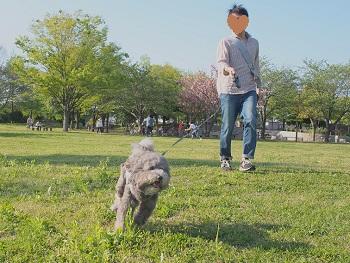 公園20150426-2