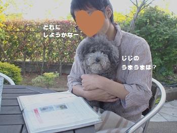 樹杏20150426-1
