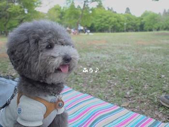 公園20150429-3