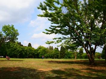 公園20150429-4