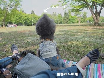 公園20150429-5