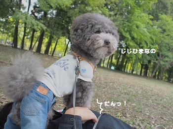 公園20150429-6