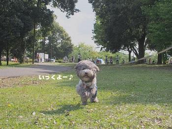 公園20150429-8