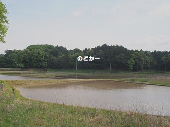公園20150429-12