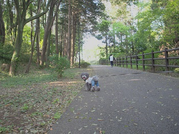 公園20150429-13