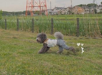 公園20150510-8