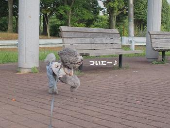 公園20150523-1