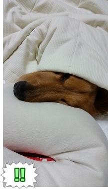 静止する犬太郎