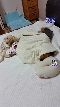 変な格好の犬太郎