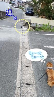 鳩vs犬太郎