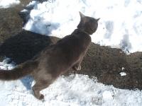 猫に小判年末ジャンボ当たれー!