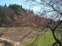 2015-04-10-006.jpg