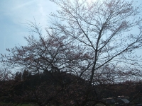 2015-04-12-014.jpg