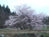 2015-04-15-004.jpg