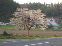 2015-04-21-014.jpg