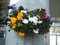 18回椿祭り2015-02-15-211