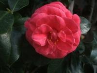 18回椿祭り2015-02-15-212