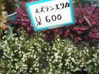 18回椿祭り2015-02-15-224