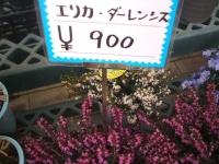 18回椿祭り2015-02-15-223