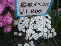 18回椿祭り2015-02-15-228