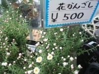 18回椿祭り2015-02-15-236