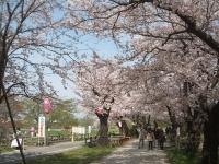 北上市、展勝地2015-04-18-006