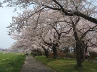 北上市、展勝地2015-04-18-043