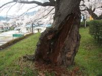 一関市役所千厩支所2015-04-17-026