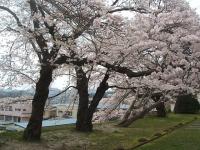 一関市役所千厩支所2015-04-17-032