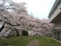 一関市役所千厩支所2015-04-17-031