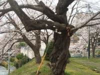 一関市役所千厩支所2015-04-17-035