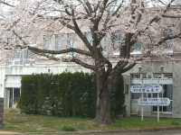 一関市役所千厩支所2015-04-17-047