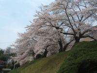 一関市役所千厩支所2015-04-17-043