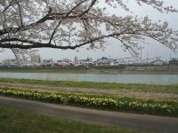 北上市、展勝地2015-04-18-089