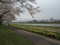 北上市、展勝地2015-04-18-091