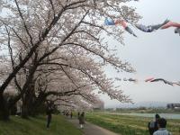 北上市、展勝地2015-04-18-100