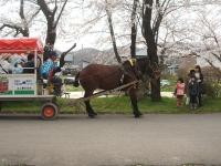 北上市、展勝地2015-04-18-097