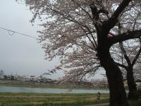 北上市、展勝地2015-04-18-104