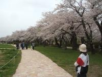 北上市、展勝地2015-04-18-113