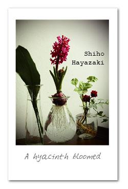 花と緑の器たち_早崎