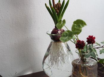 花と緑の器たち_早崎4