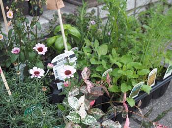 花と緑の器たち_2